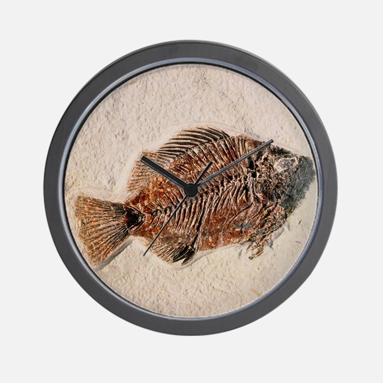 Fossilised fish, Priscacara serata Wall Clock