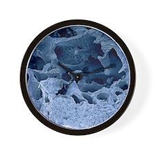 Fossilised bird bone, SEM Wall Clock