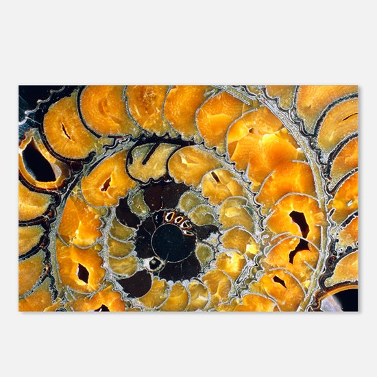 Fossil ammonite Postcards (Package of 8)
