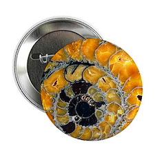 """Fossil ammonite 2.25"""" Button"""