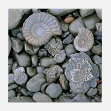 Fossilised ammonite shell among pebbl Tile Coaster