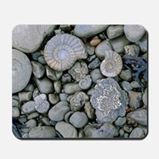 Fossilised ammonite shell among pebbles Mousepad