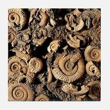 Fossilised ammonites Tile Coaster