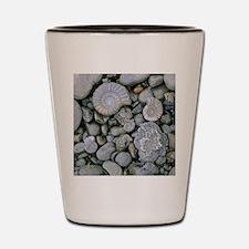 Fossilised ammonite shell among pebbles Shot Glass