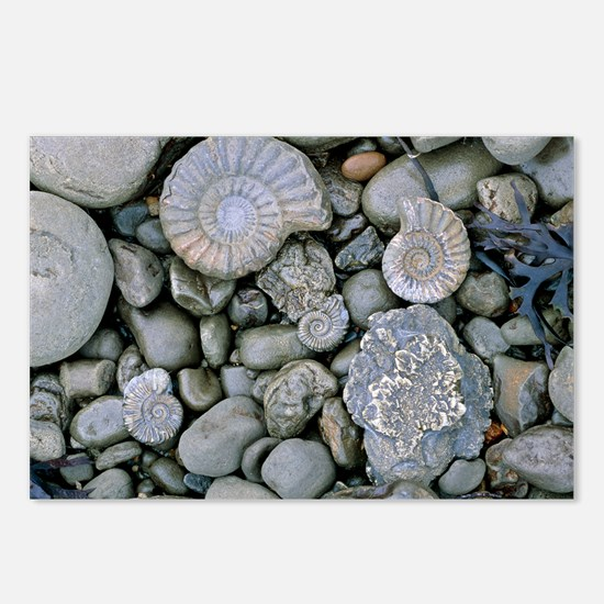Fossilised ammonite shell Postcards (Package of 8)