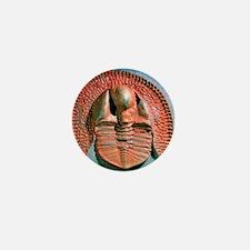 Fossil trilobite from the Ordovician p Mini Button