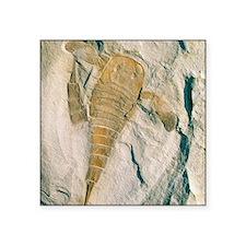 """Fossil of a sea scorpion, E Square Sticker 3"""" x 3"""""""