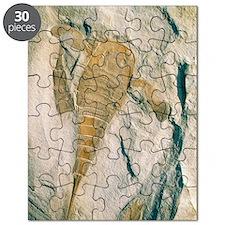 Fossil of a sea scorpion, Eurypterus remipe Puzzle