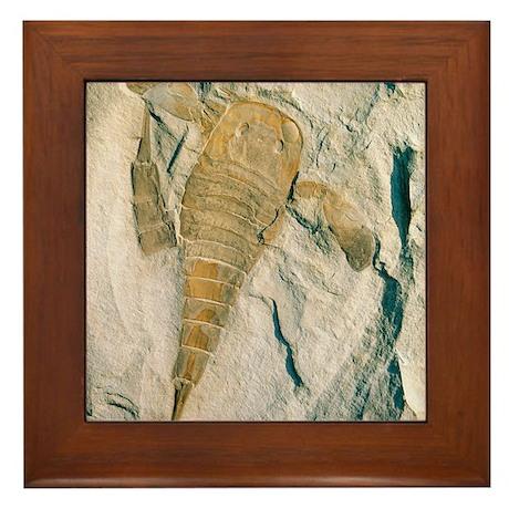 Fossil of a sea scorpion, Eurypterus r Framed Tile