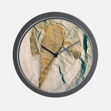 Fossil of a sea scorpion, Eurypterus re Wall Clock