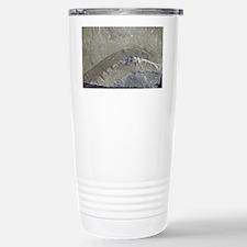 Fossil arthropod Travel Mug