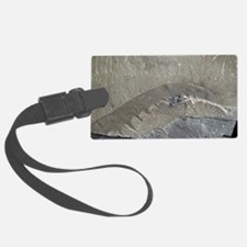 Fossil arthropod Luggage Tag