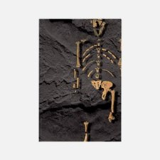 Footprints and skeleton of Lucy Rectangle Magnet