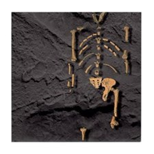Footprints and skeleton of Lucy Tile Coaster