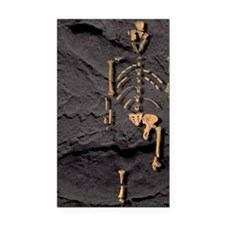 Footprints and skeleton of Lu Rectangle Car Magnet