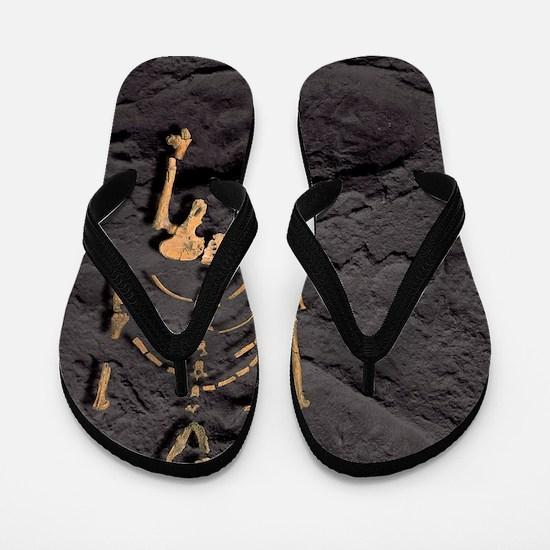 Footprints and skeleton of Lucy Flip Flops