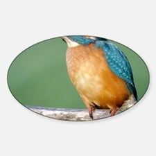 Juvenile common kingfisher Decal