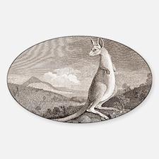 Kangaroo, 18th century plate Decal