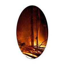 Forest fire Oval Car Magnet
