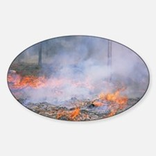 Forest fire Decal