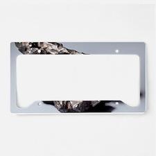 Iron meteorite fragment License Plate Holder