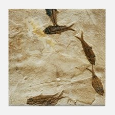 Fish fossils Tile Coaster