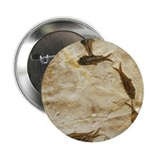 """Fish fossils 2.25"""" Button"""