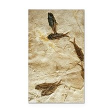 Fish fossils Rectangle Car Magnet
