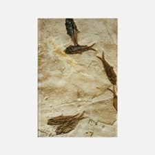 Fish fossils Rectangle Magnet