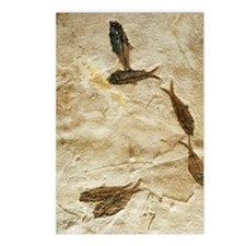 Fish fossils Postcards (Package of 8)