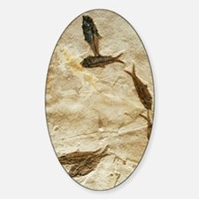 Fish fossils Decal