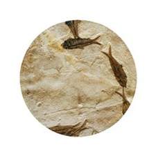 """Fish fossils 3.5"""" Button"""