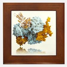 Influenza nucleoprotein, molecular mod Framed Tile
