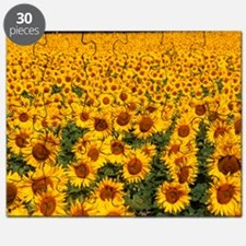 Field of sunflowers, France Puzzle