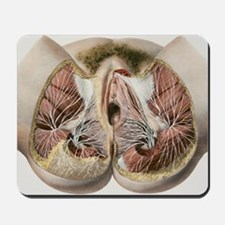 Female perineal nerves, 1844 artwork Mousepad