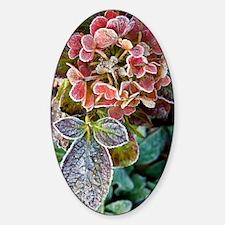 Hydrangea sp Sticker (Oval)