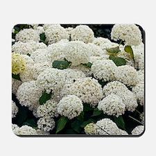 Hydrangea arborescens 'Annabelle' Mousepad