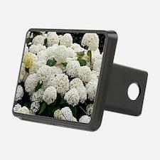 Hydrangea arborescens 'Ann Hitch Cover