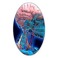 Human head anatomy, artwork Decal