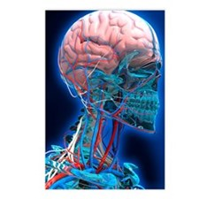 Human head anatomy, artwo Postcards (Package of 8)