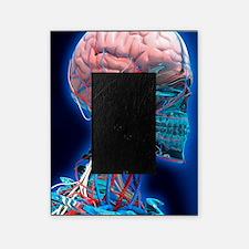 Human head anatomy, artwork Picture Frame