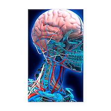 Human head anatomy, artwork Rectangle Car Magnet