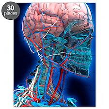 Human head anatomy, artwork Puzzle