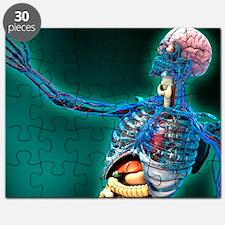Human anatomy, artwork Puzzle