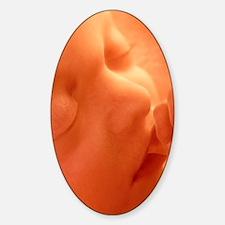 Human foetus sucking its thumb, art Decal