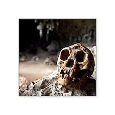 "Homo floresiensis skull Square Sticker 3"" x 3"""