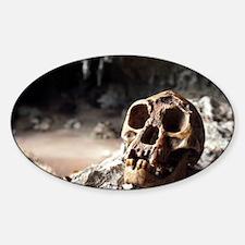 Homo floresiensis skull Decal
