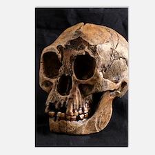 Homo floresiensis skull Postcards (Package of 8)