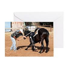 Horse trainin Greeting Card