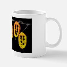 Honesty (Lunaria sp.) Mug
